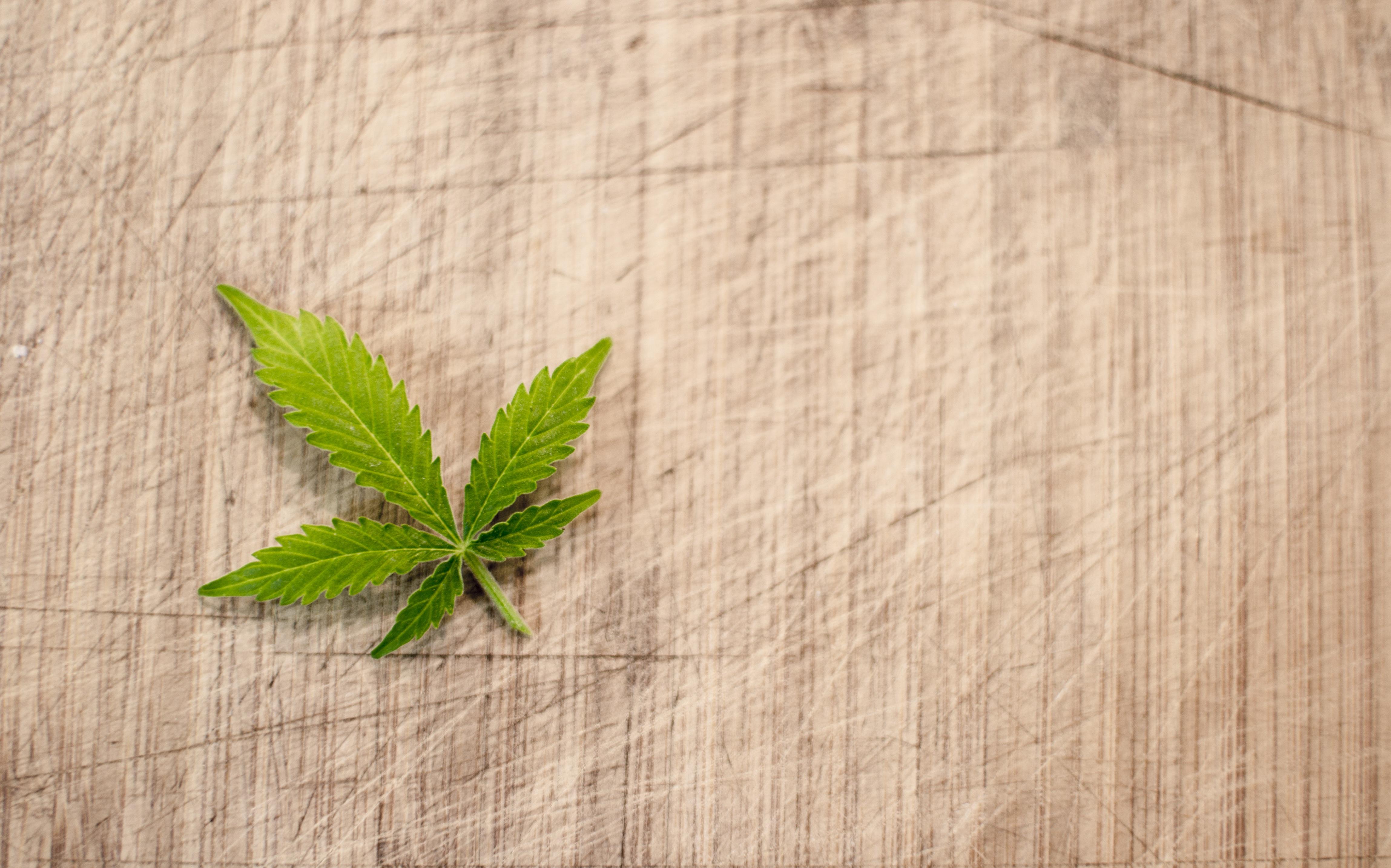 Marijuana leaf on canvas.