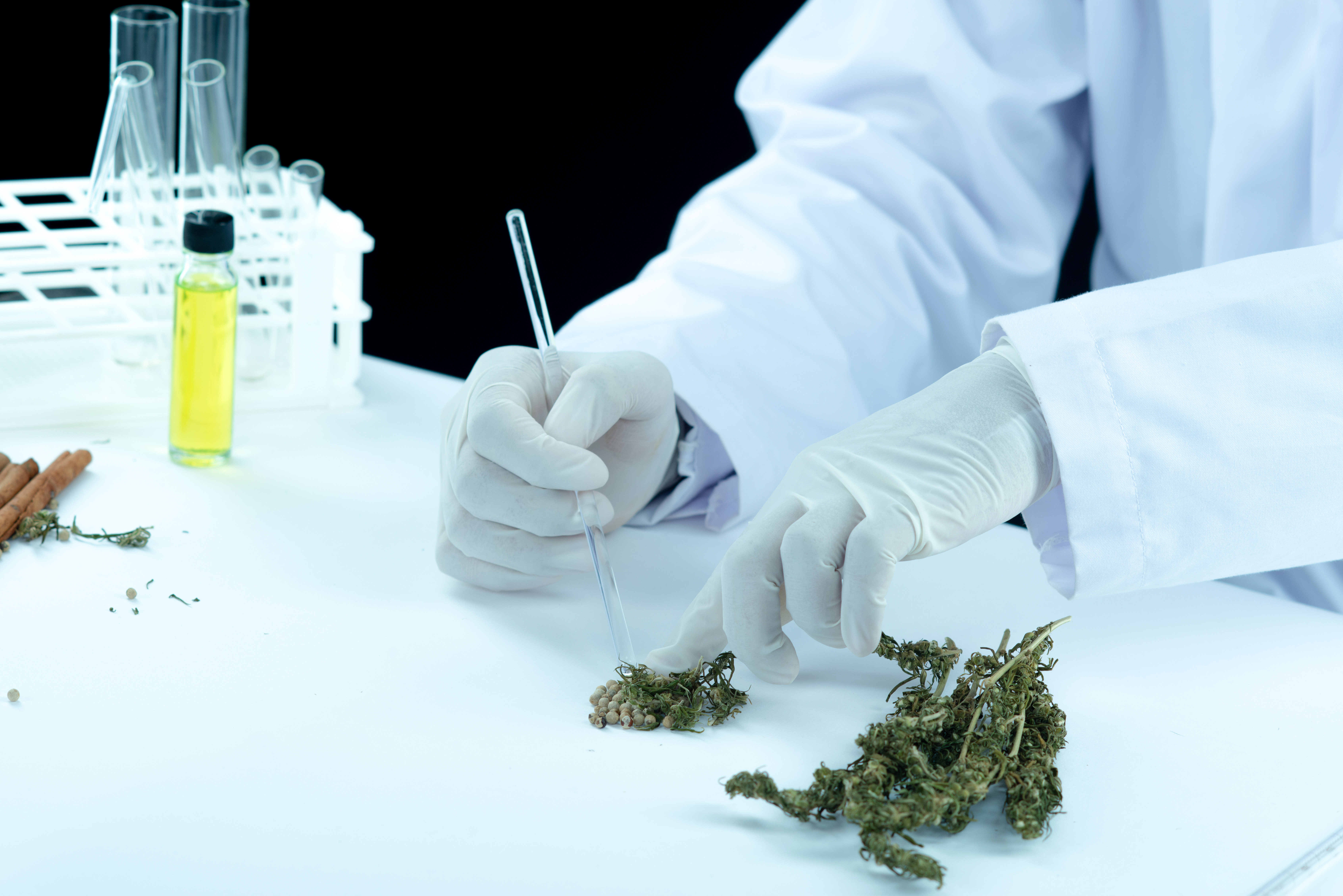 Lab tech with CBD and marijuana flowers.