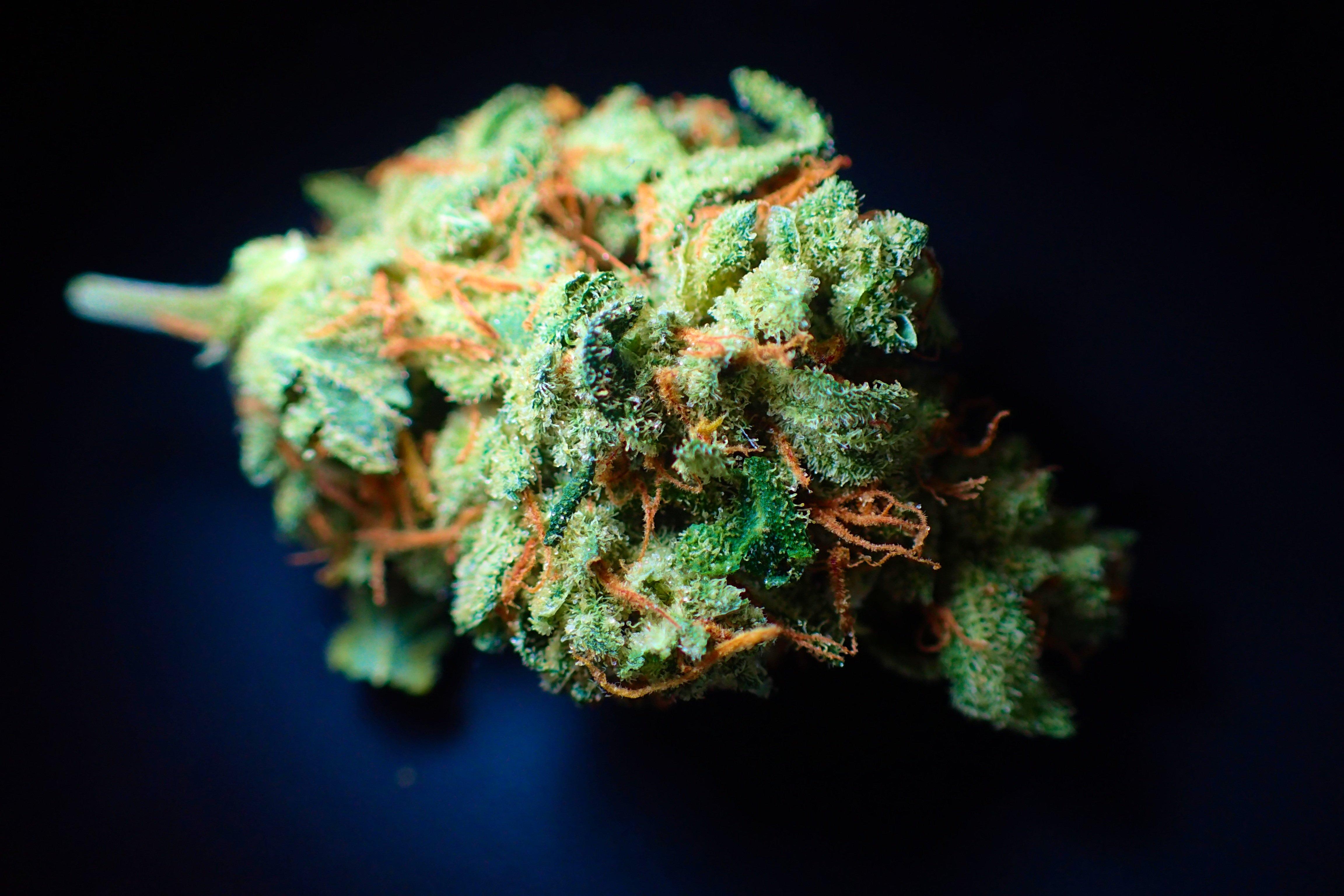 Marijuana flower bud.