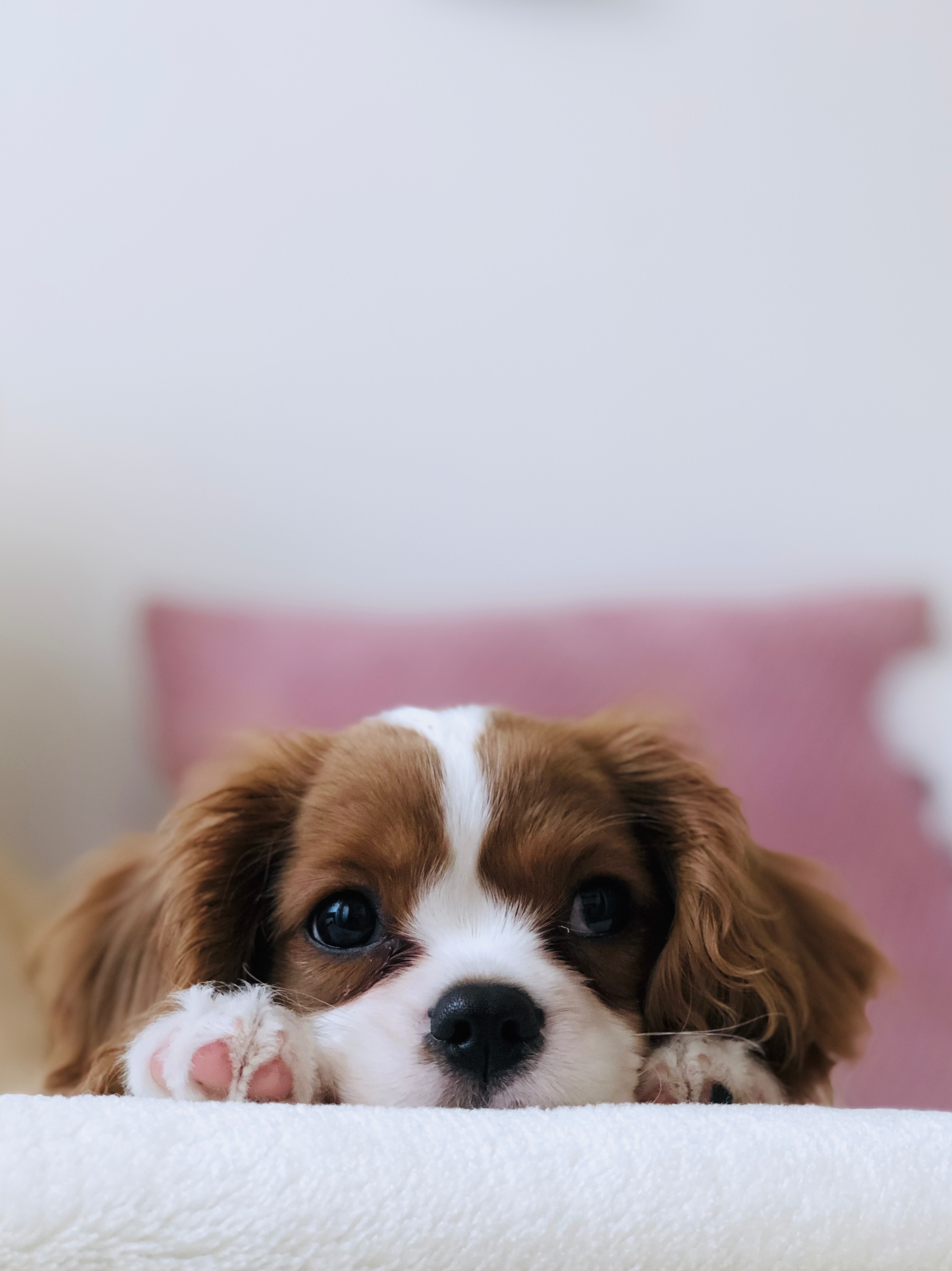 White and brown puppy.