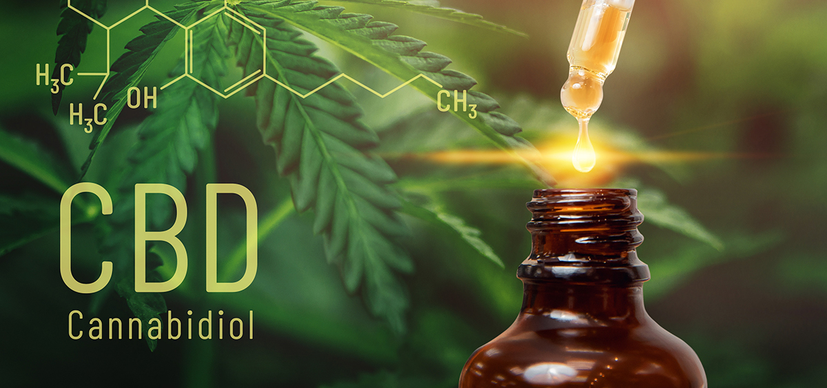 Cannabis CBD oil extracts in jars herb and leaves.