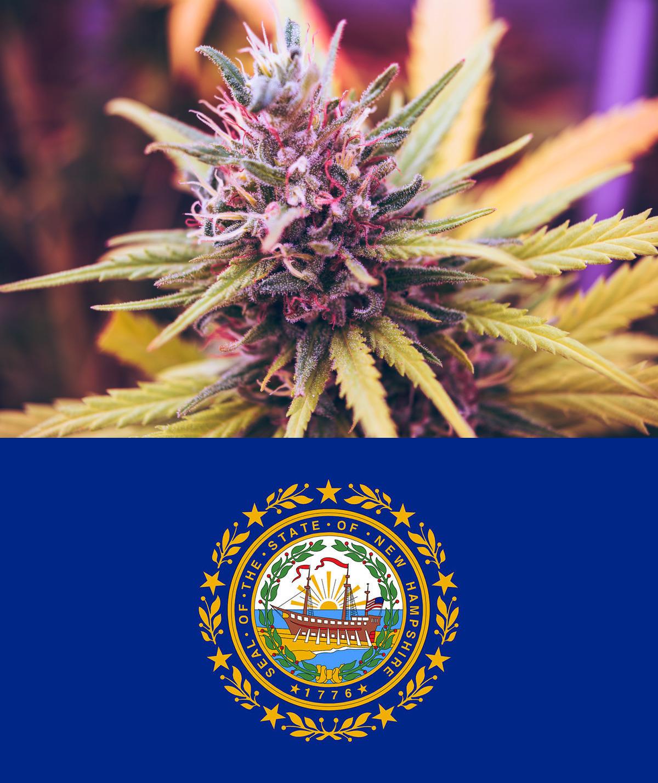 (Top) Marijuana flower bud. (Bottom) New Hampshire state seal.