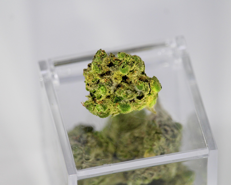 Marijuana bud in plastic container.